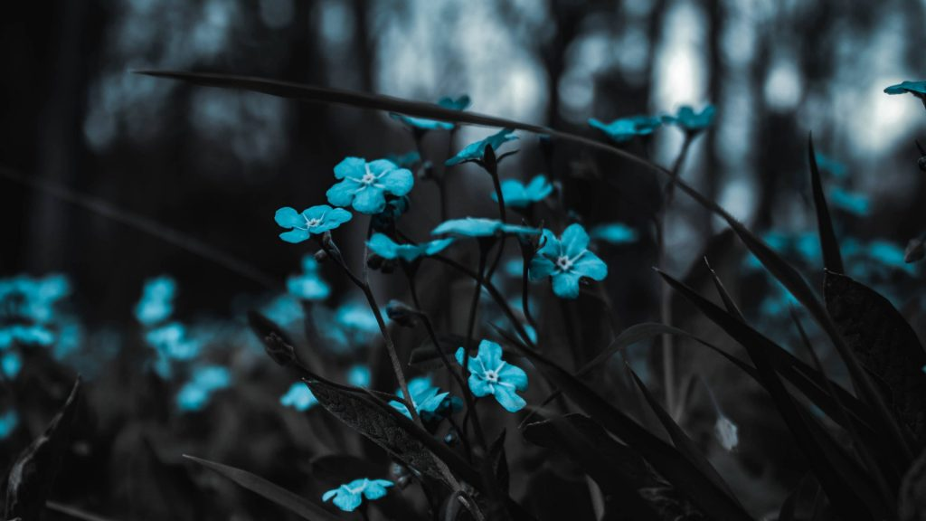 Flowers Blue HD Wallpaper For Mobile