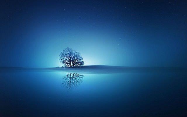 Free Tree in the blue sunset HD wallpaper