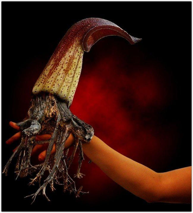 Create A Fantasy Flower Creature