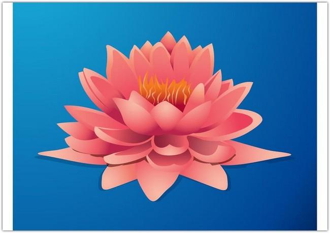 Lotus Graphics