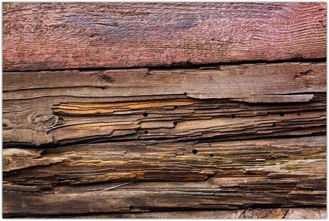 Plank Rotten Wood Woodworm Texture