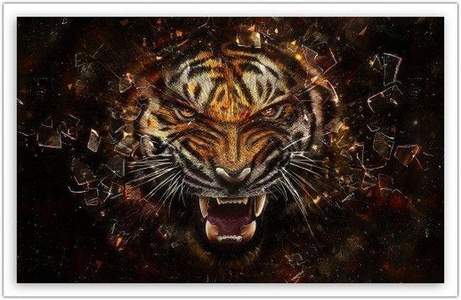 Tiger Backgrounds wallpaper