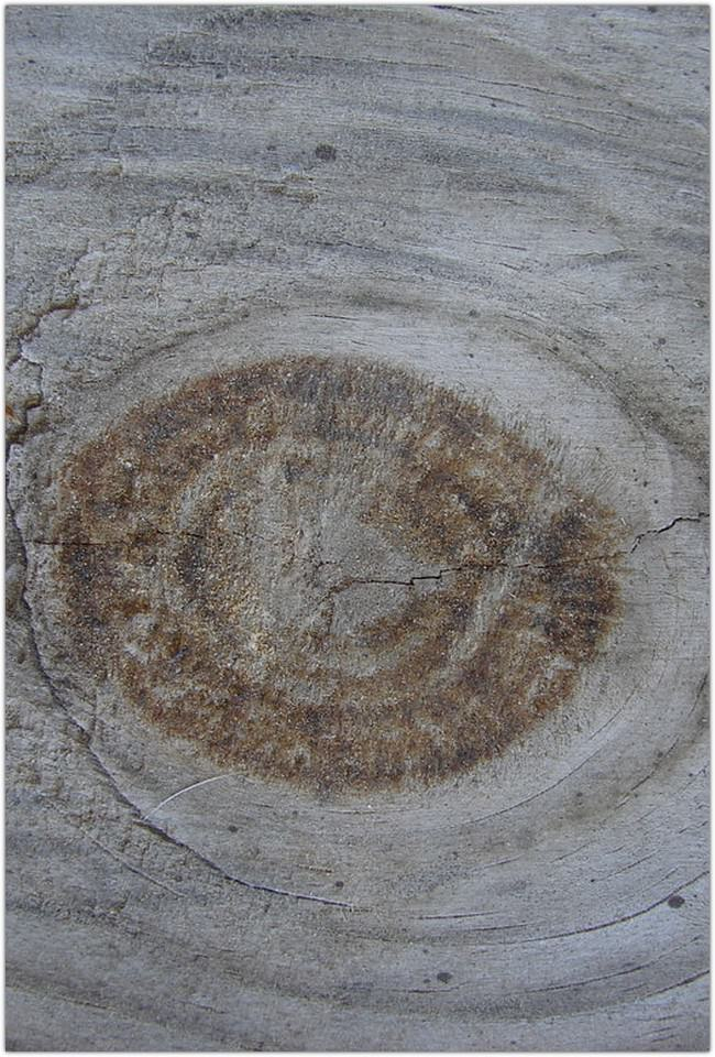 Wood Grain Texture 3