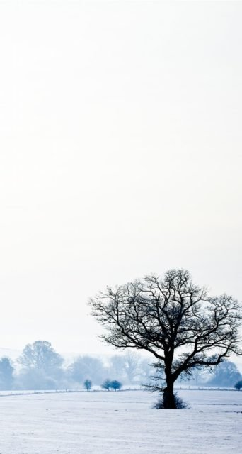Tree in Snow Iphone 5 Landscape Wallpaper
