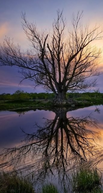 Alluring Tree Iphone 5 Landscape Wallpaper