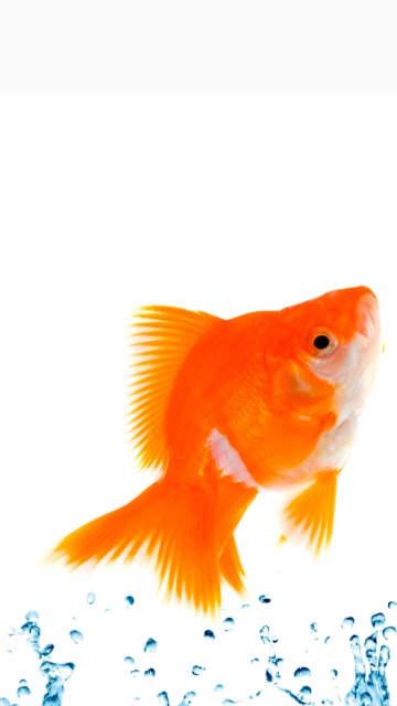 Iphoe-fish-splash-jump