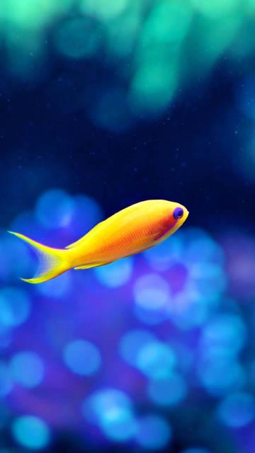 Iphone-fish-wallpaper-Gold-Swimming-Underwater-World