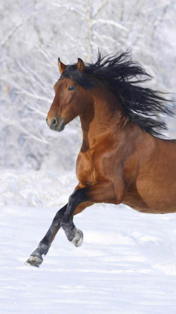 Iphone horse in Snow Wallpapers