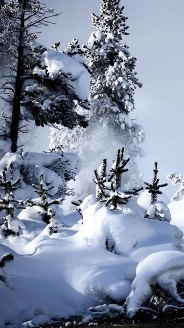 Iphone snow water fog steam fir-trees trees river Wallpaper