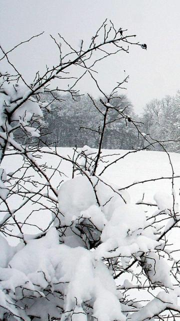 Iphone snow winter park fence trees snowdrifts Wallpaper