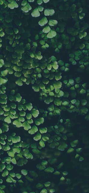 blur green leaves
