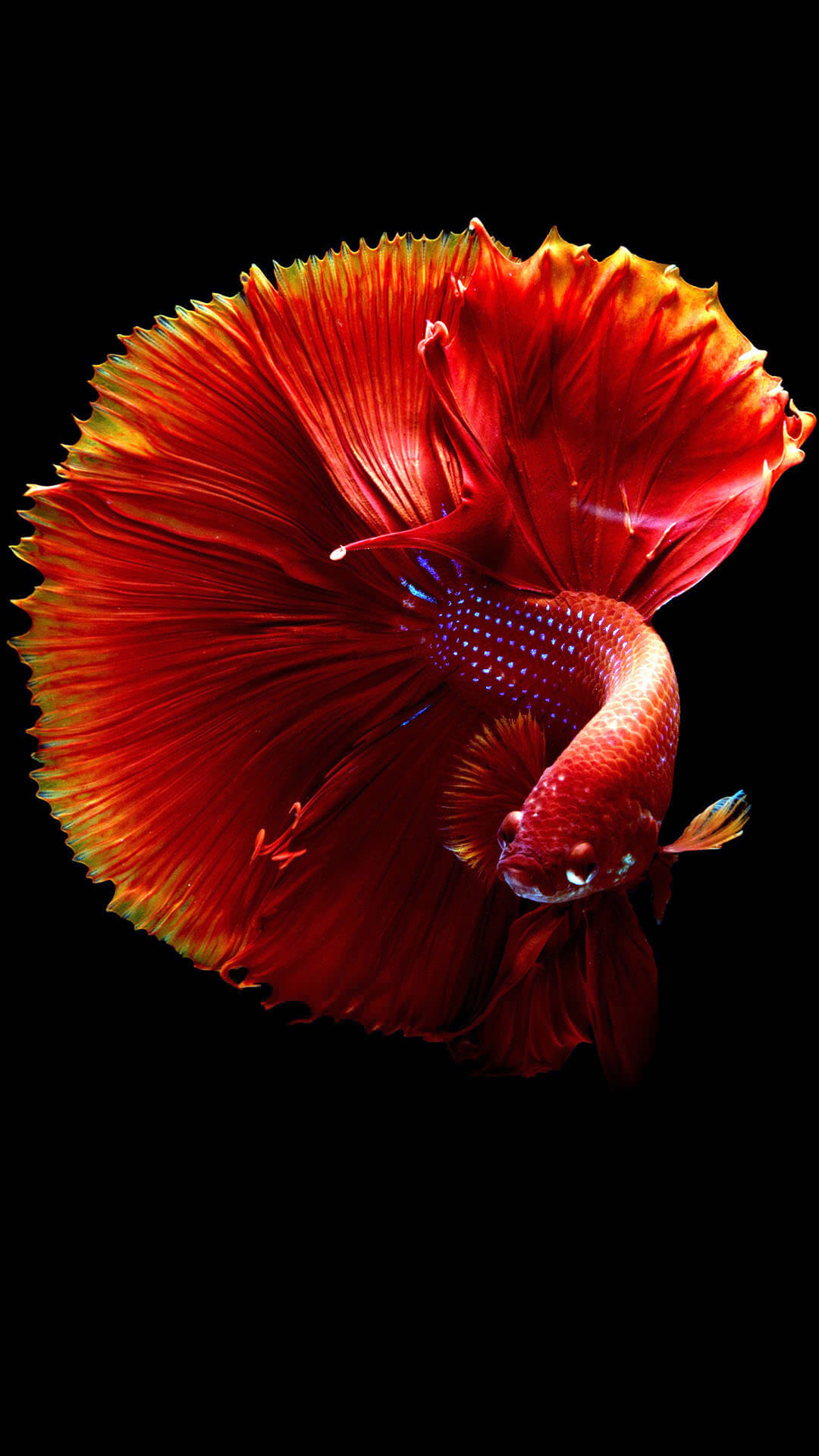 25+ Best Fish Wallpapers For Iphone - Templatefor