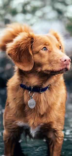 iPhone X dog