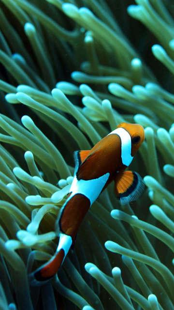 Iphone-fish-wallpaper-underwater-swim-ocean-sea