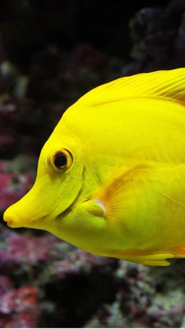 beautiful-Iphone-fish-wallpaper-underwater-swimming