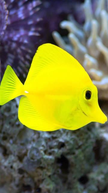 iphone-fish-yellow-underwater-seaweed