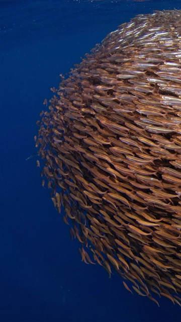 iphone-sea-fish-underwater-swimming