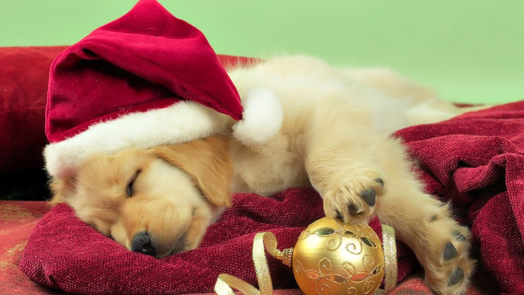 christmas dog sleeping wallpaper