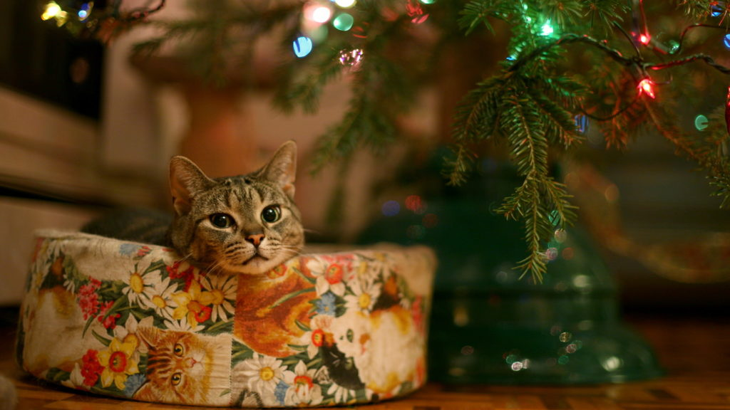 cute kitty christmas wallpaper