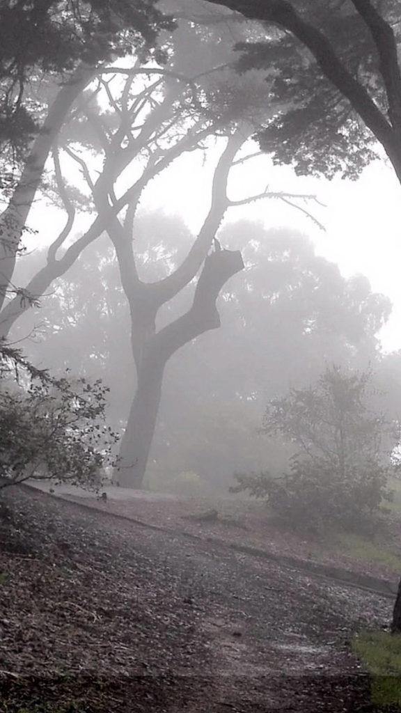 mysterious-gloomy