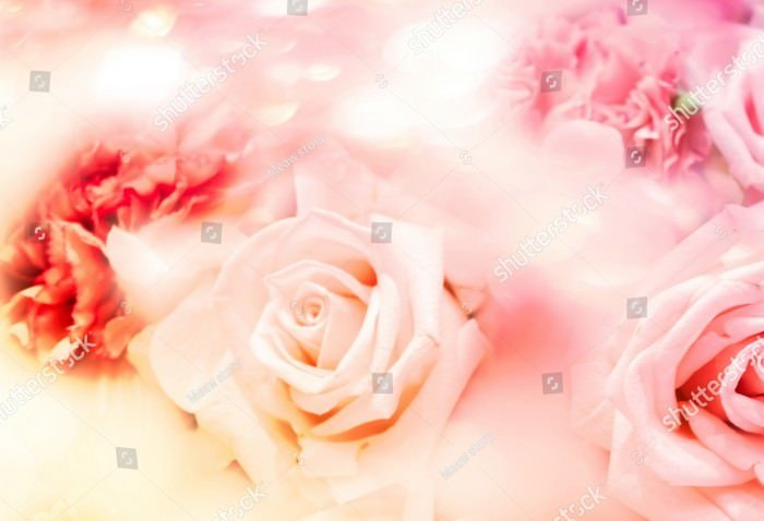 Blurred Sweet Pastel Color of Rose Flowers