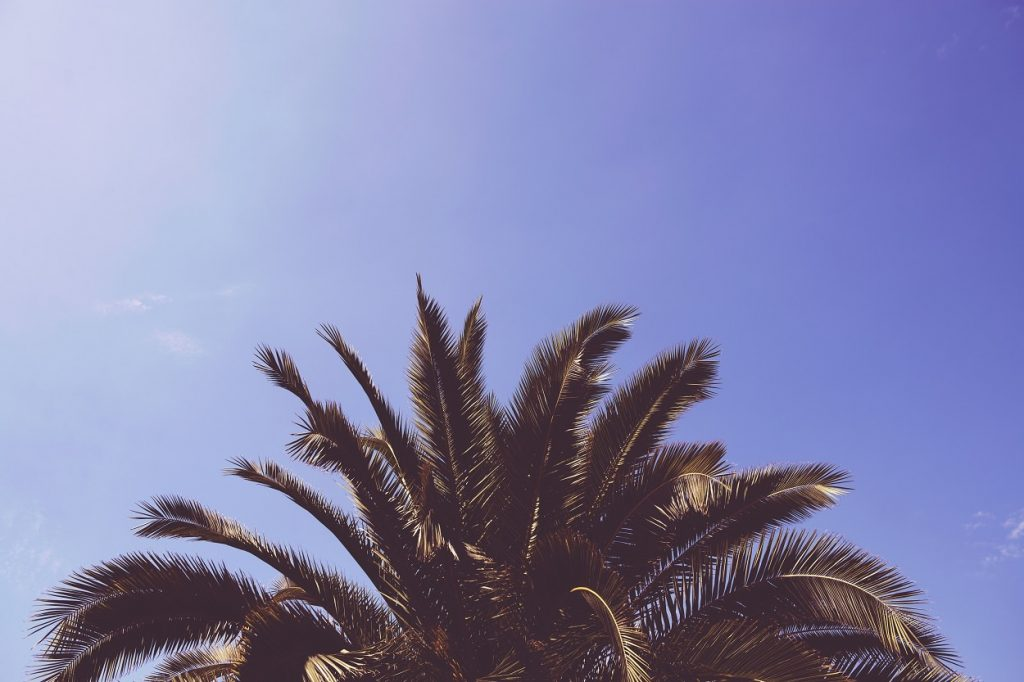Palm Tree hipster background