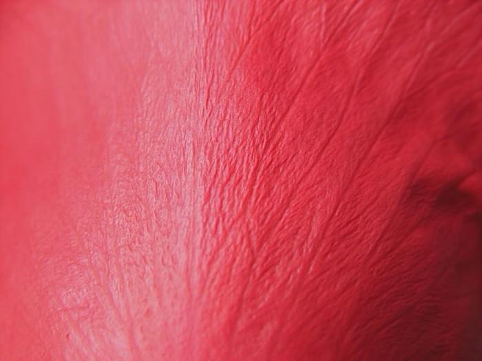 Red Rose Petal Texture