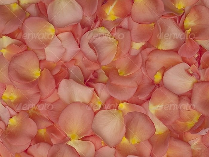 Rose Petals Texture Background