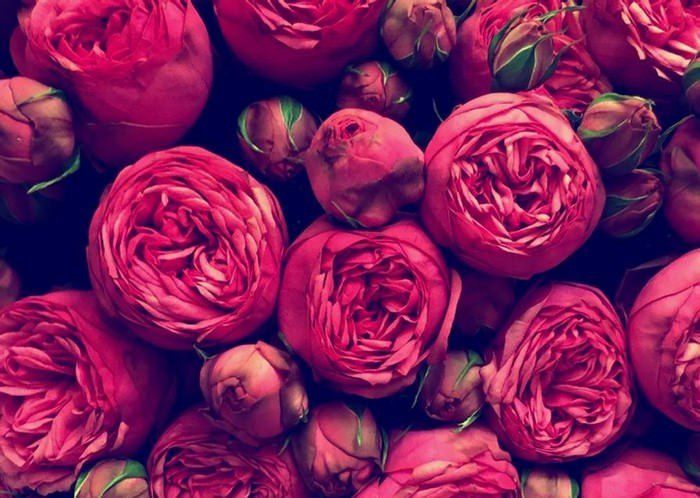 Roses Texture III