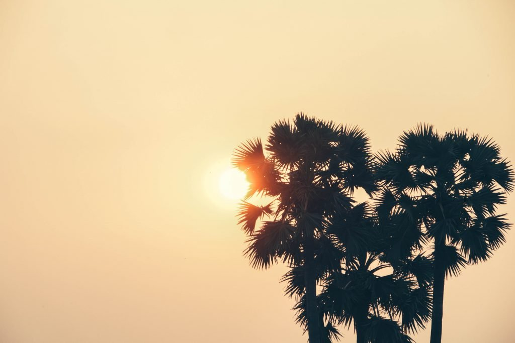 Sun Behind Tree hipster background