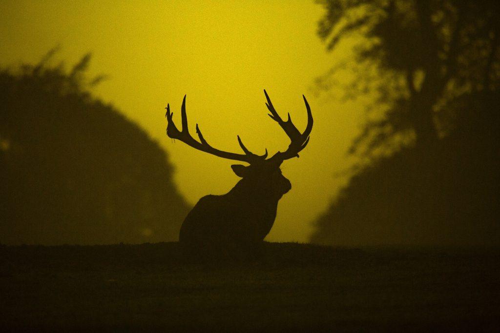 Deer Tumblr Background HD-2560 × 1707