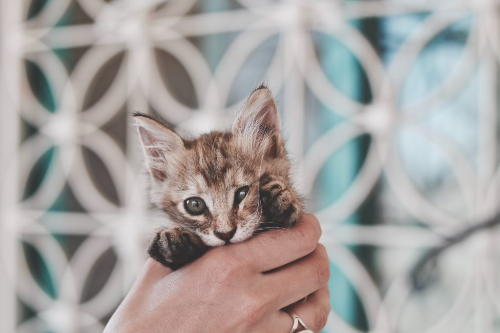 Cute Cat in Hand Tumblr Background-2560 × 1707