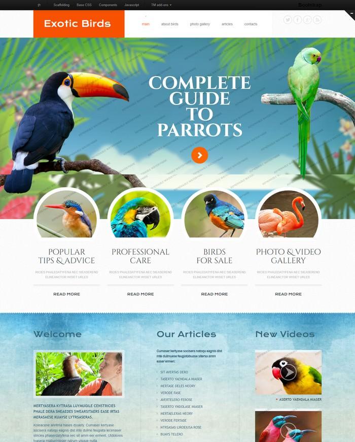 Birds Responsive Website Template