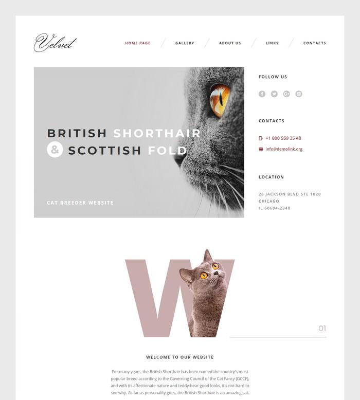 Cat Responsive Website Template