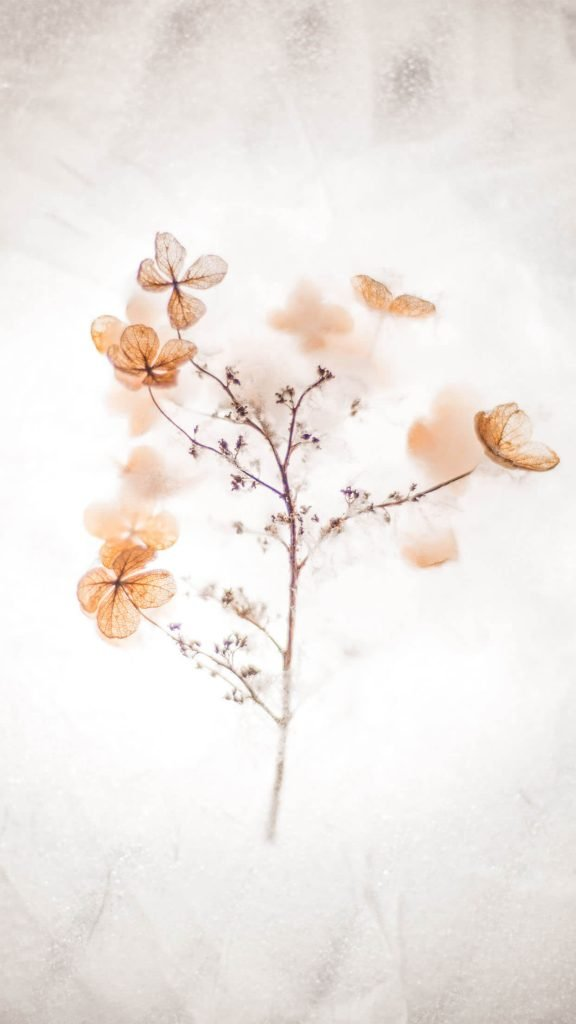 1242 × 2208 orange flower iphone 6 Plus Aesthetic Wallpapers