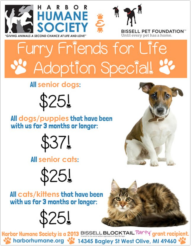 Life Adoption Special Flyer
