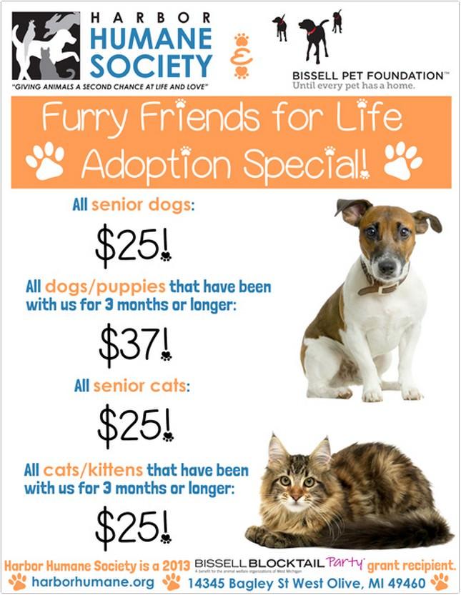 Life Adoption Special Flyer