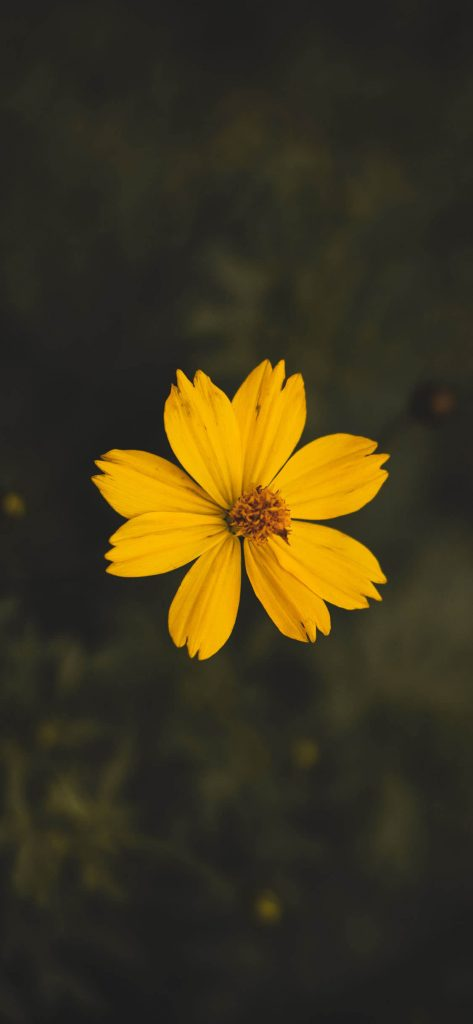 1125 × 2436 yellow flowers iphone xs