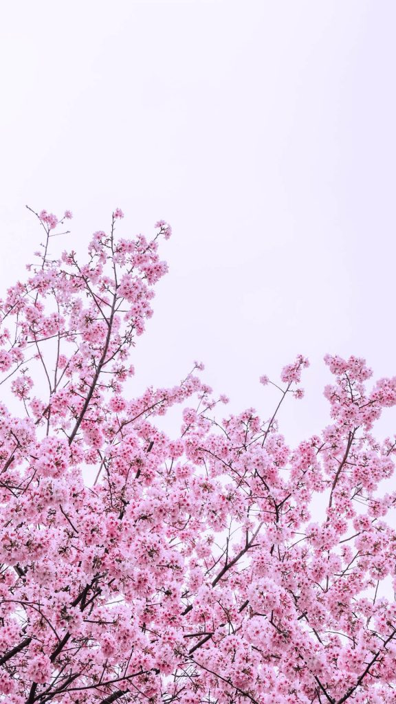 1080 × 1920 iPhone spring flowers wallpapers