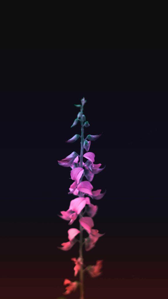 1080 × 1920 flower Focus iPhone Wallpaper