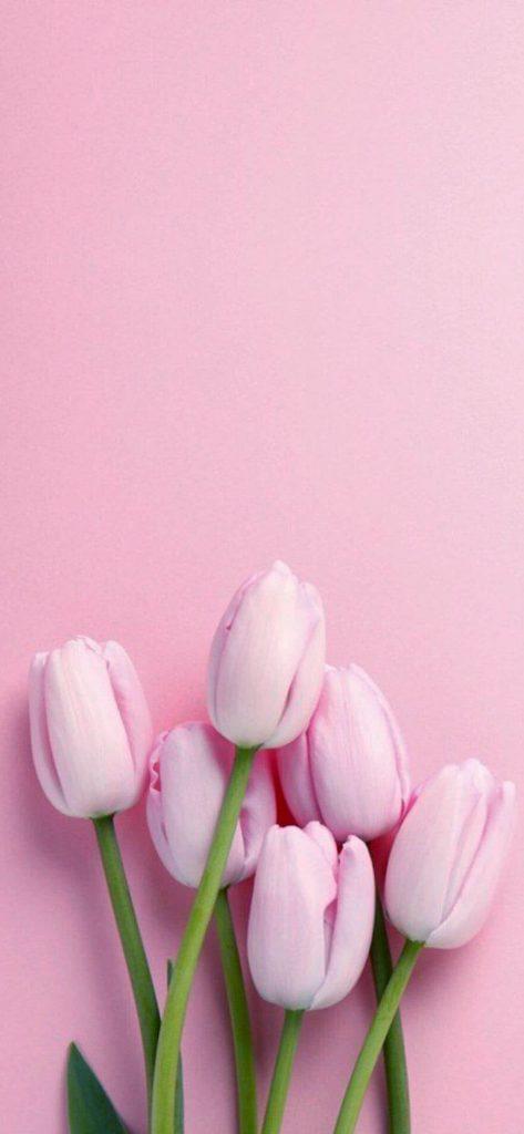 1125 × 2436 iPhone X Pink Flower wallpaper