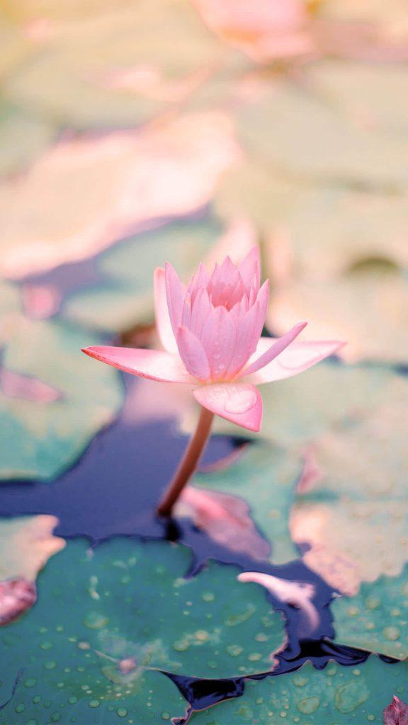 1080 × 1920 Flower in lake iPhone wallpaper