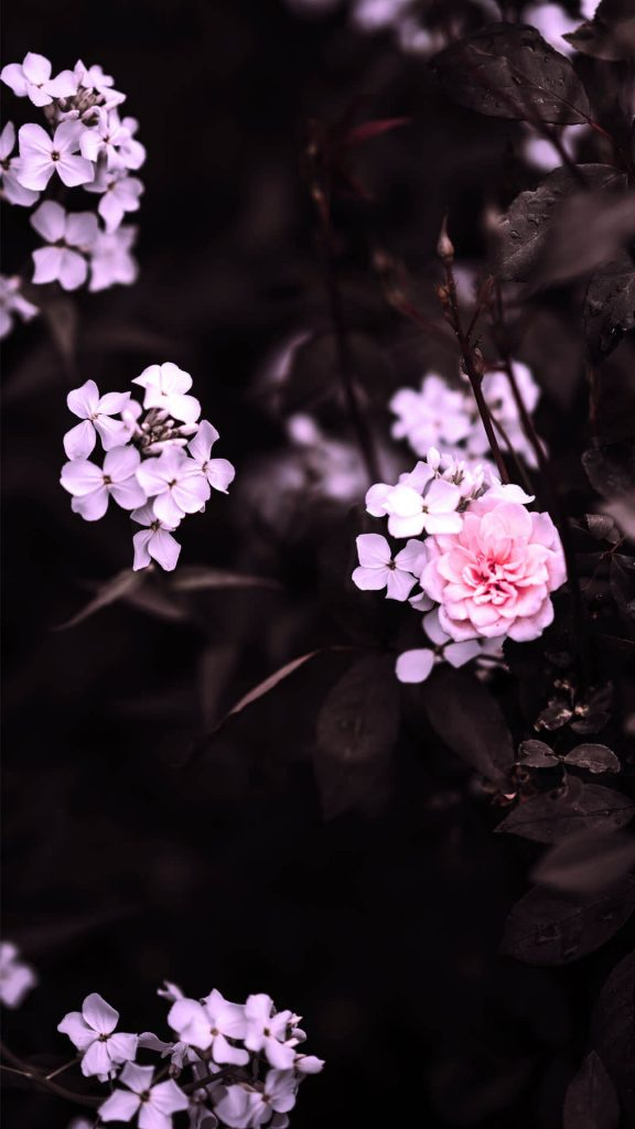 1080 × 1920 Light pink iPhone flower wallpapers