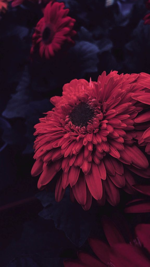 1080 × 1920 HQ Flower iPhone background