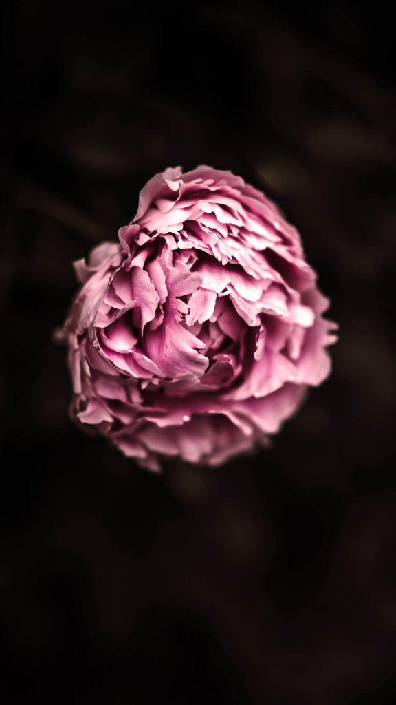 1080 × 1920 Blur iPhone flower wallpapers