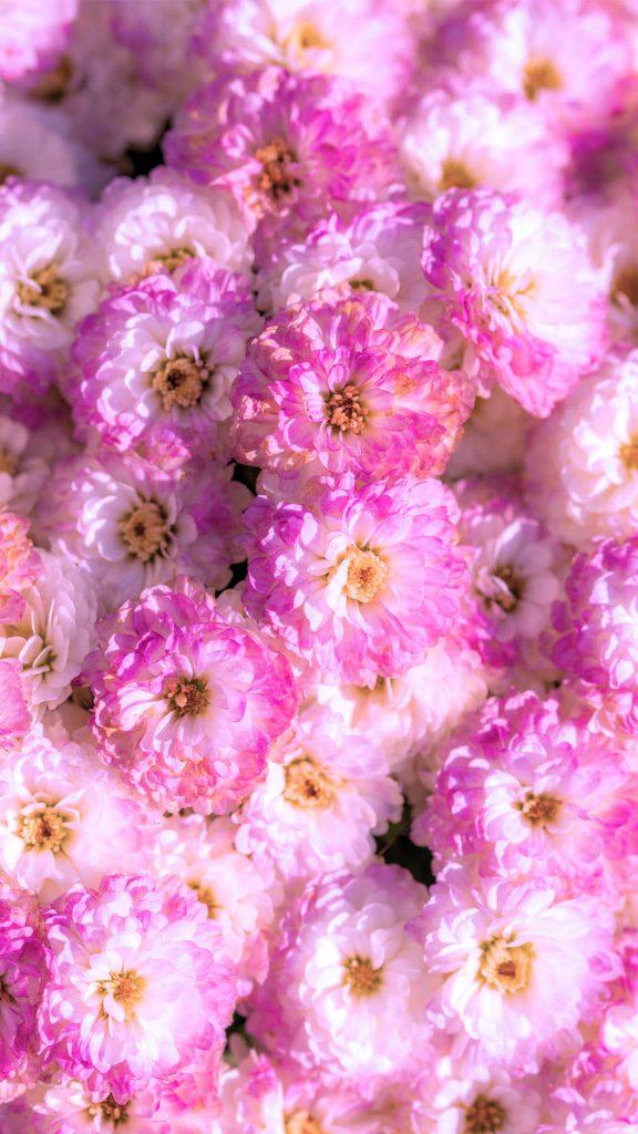 1080 × 1920 iPhone Pastel Flowers wallpapers