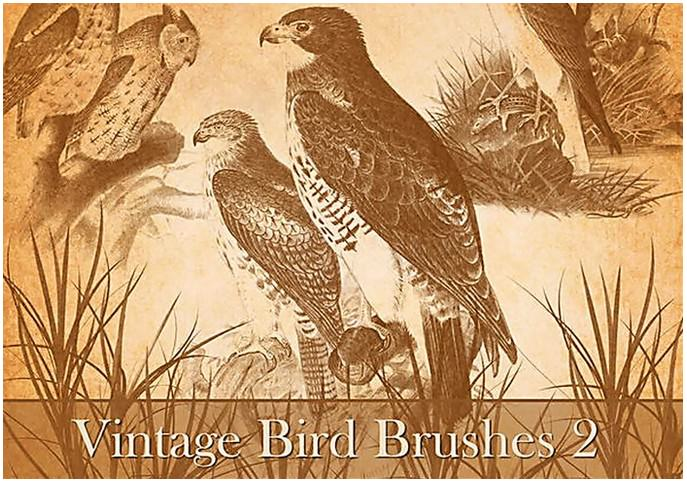 Vintage Bird Brushes 2