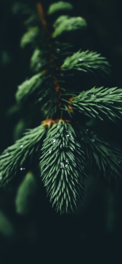 1125 × 2436 HD Green Tree iPhone X wallpapers