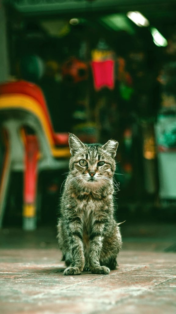 1080 × 1920 Cat Cute iPhone Wallpapers