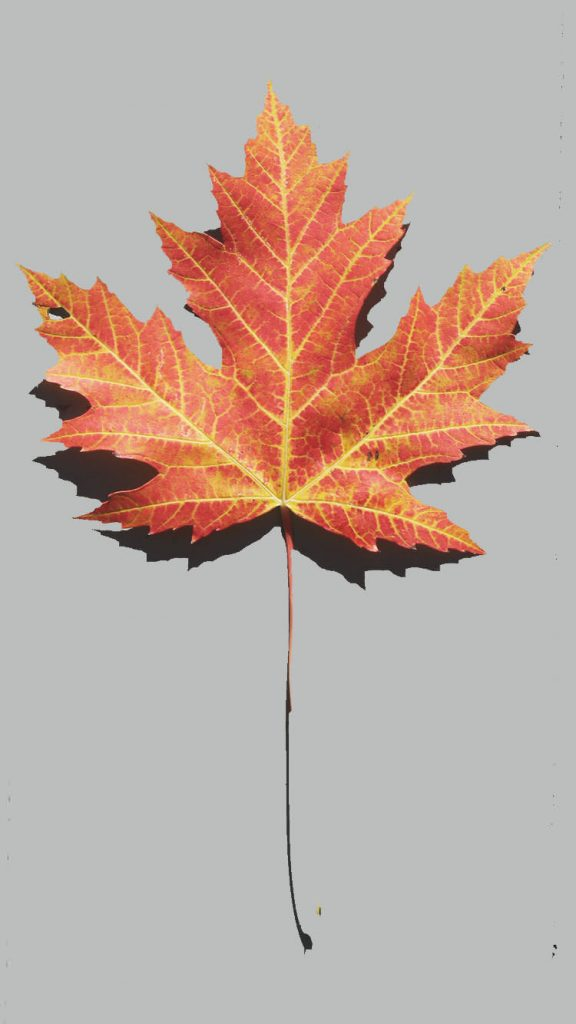 750 × 1334 Autumn iPhone iPhone 7 Wallpapers